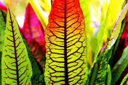 Striped Green Plant Zdjęcie Seryjne