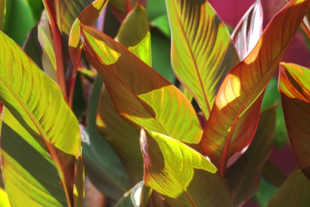 Canna Leaves Using Curves photo