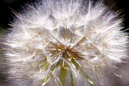 Macro Milkweed Dandelion Stock Photo - 15034498