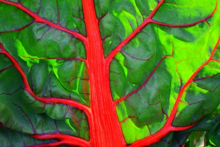 Colorful Rainbow Chard Leaf