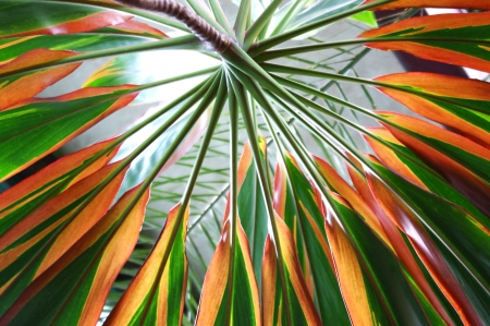 forest products: Tropical Palm Tree