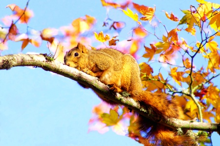 Squirrel Hanging on to a Branch during a Windy Fall Day Stock Photo - 16694412