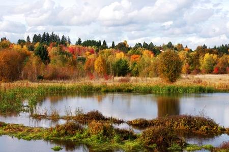Wetlands Marsh in Autumn