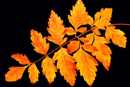 Fall Branch on Black Stock Photo - 17886717