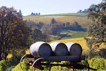 Vineyard Vista with Oak Barrels