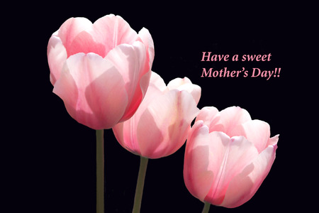 pink tulips: Mother s Day Pink Tulips