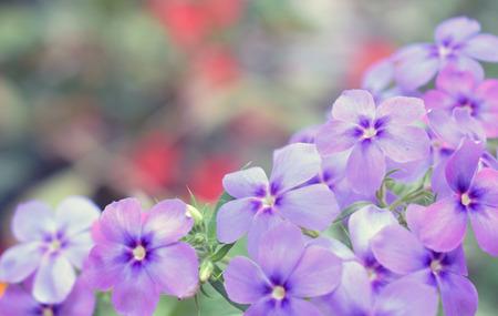 blue flower in the garden Foto de archivo - 122652492