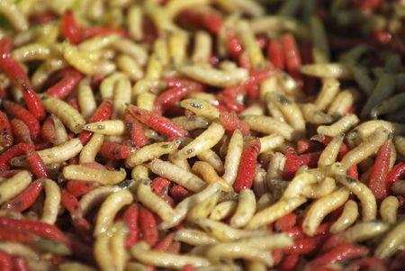 weerzinwekkend: Verschillende wormen in rood een geel. Invertebrate bugs