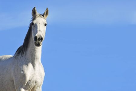 White horse on the sky. Equestrian concept. Copy space photo