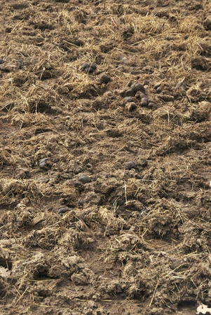 Manure on the ground  Animal excrement used to fertilize soils  Agriculture Stock Photo - 17975701