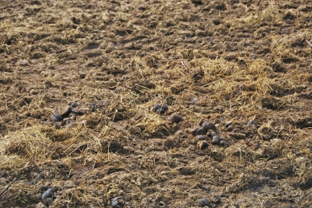 Manure spreaded on the ground  Animal excrement used to fertilize soils  Agriculture photo