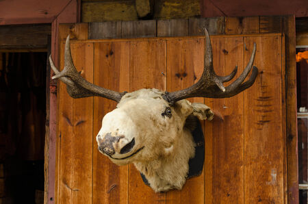 ムース頭の古い木製のドアに配置