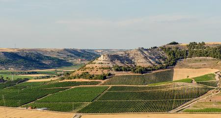 Fields of vineyards in Penafiel, Ribera del Duero, Valladolid, Spain