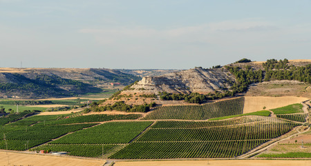 Fields of vineyards in Penafiel, Ribera del Duero, Valladolid, Spain