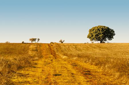 rural road after harvest in the fields of Guadalajara, Castile la Mancha, Spain photo