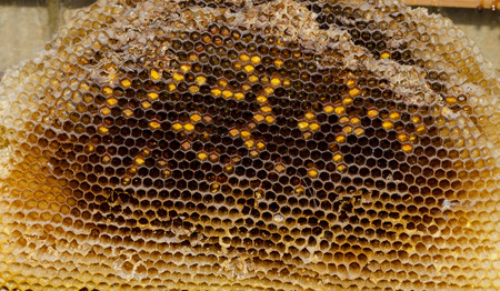 praiseworthy: Cells in an old honeycomb. Natural pattern made by bees