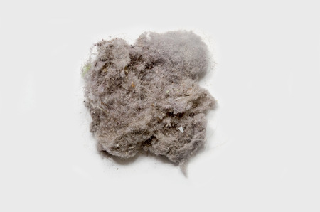 polvo: Conejito de polvo sobre un fondo blanco. El polvo de casa puede producir alergias Foto de archivo