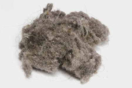 polvo: Bola de polvo sobre un fondo blanco. El polvo de casa puede producir alergias. Conejito polvo