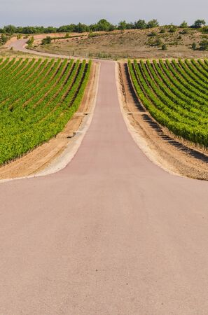 oenology: A road crosses a vineyard. Agriculture concept