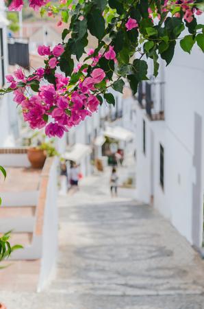 bougainvillea: Bougainvillea in the streets of Frigiliana, Malaga, Spain