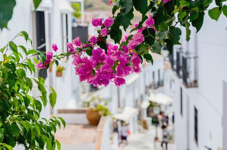 frigiliana: Bougainvillea in the streets of Frigiliana, Malaga, Spain