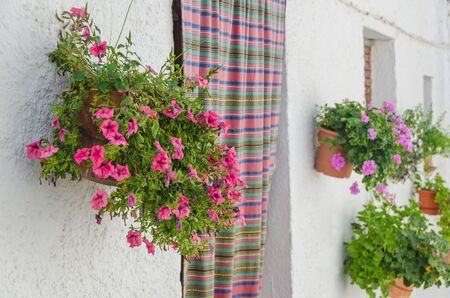 solanaceae: Typical house entrance with plantpots and jarapa in andalusia. Bubion, Granada, Spain