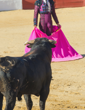 corrida: The bullfighter awaits the bull holding the cape. Spanish corrida.