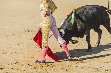 torero: Spanish torero with a bull in a bullfight Stock Photo