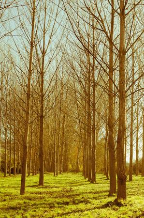 Leafless trees in a park. Autumn season