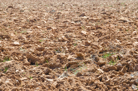 plough land: View on brown digged soil with grass growing partly in sunlight. Agriculture concept