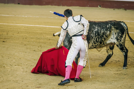 capote: A bullfighter with white costume giviing a pass to the bull with his cape. The matador confronts the bull with the capote Stock Photo