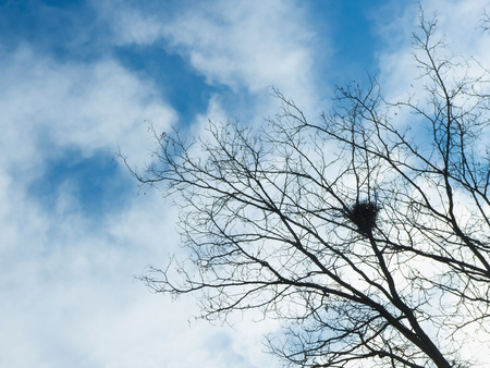 tree branch: View on nest on tree branches against of blue sky with white clouds
