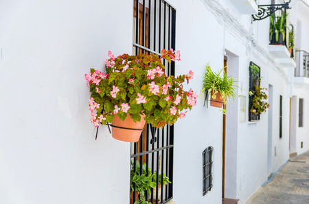 close  up: Close-up of beautiful potted flowers on white wall outdoor. Andalusian streets Stock Photo