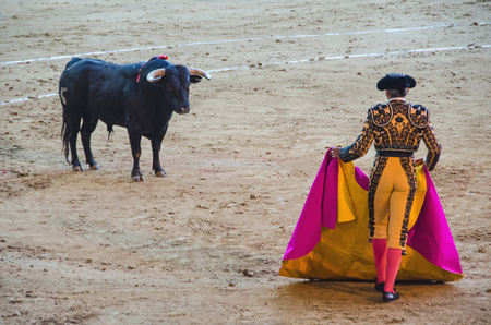 toros: Brave bullfighter in front of the bull and holding the cape. Spanish corrida de toros
