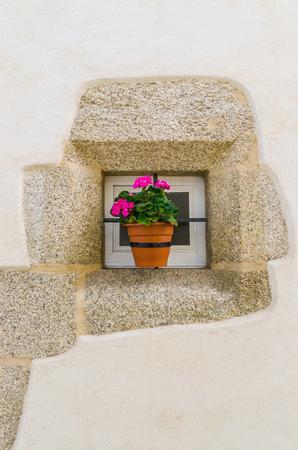 transplanted: Pink geranium in a flowerpot Stock Photo