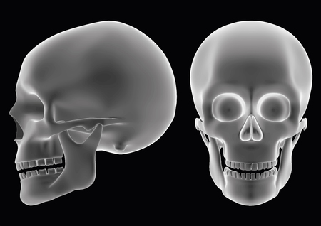 halloween human skull over a black background. Model seems to be semi transparent as if it was an hologram or radiography. vector illustration