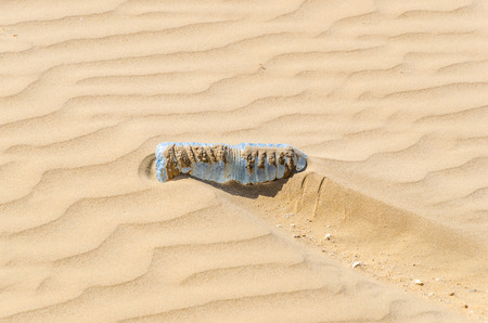 bottle of water on the dry sand of the desert. Suffering and dehydration concept
