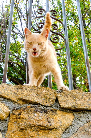 Detail on a cat meowing from a fence