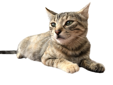 Portrait of a tabby cat lying isolated over a white background Imagens