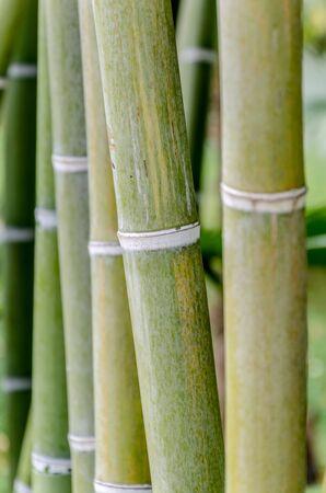 Closeup of bamboo stalk on an ornamental garden