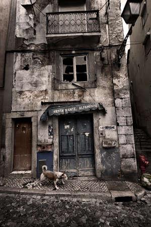 squalor: Dog walking on old city of Lisbon, Portugal