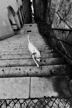 Dogs upstairs in Lisbon, Portugal, B&W photo