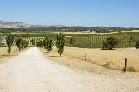 barossa: Landscape of Barossa Valley, Australia