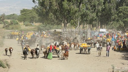 poorness: GREAT RIFT VALLEY, ETHIOPIA - NOVEMBER 16, 2014: People providing themselves with water on a waterhole on November 16, 2014 in the Great Rift Valley, Ethiopia, Africa