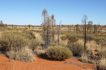 flora: Typical flora of the outback of Australia