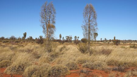 downunder: Typical flora of the outback of Australia
