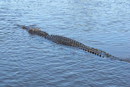 kakadu: Saltwater Crocodile, Kakadu National Park, Australia