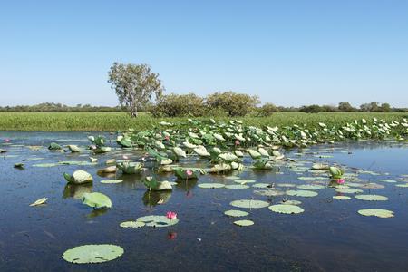노란 물, 호주에 가까운 카카 두 국립 공원의 풍경 스톡 콘텐츠