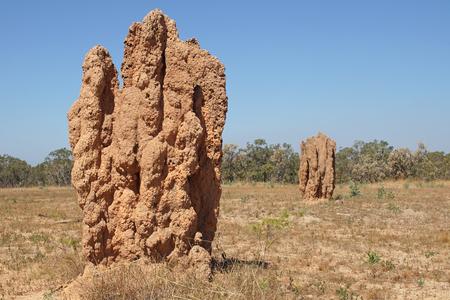 kakadu: Termite mound, Kakadu National Park, Australia