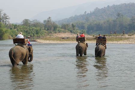 east riding: LUANG PRABANG, LAOS - FEBRUARY 12, 2016: Tourists riding elephants on February 12 in Laos, South East Asia Editorial